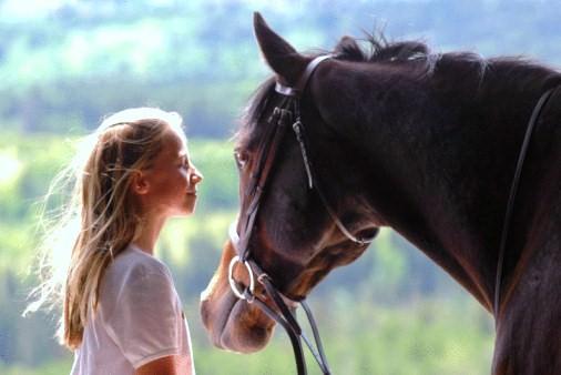 terapia-con-caballos